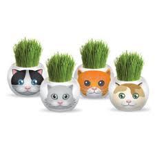 Grass Head – Adopt A Cat